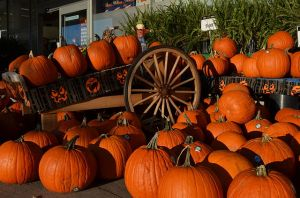 A Pumpkin display for Halloween (Photo from Wikipedia)